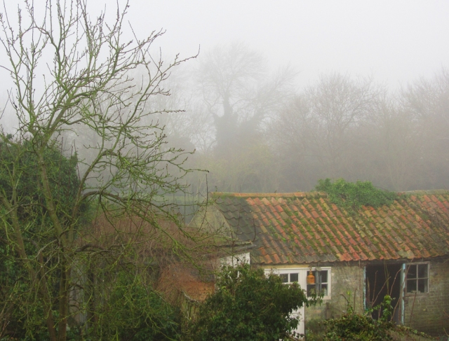 The view from my window - misty moiety