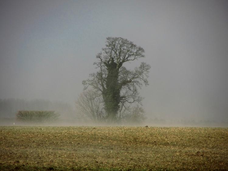 Oak mist