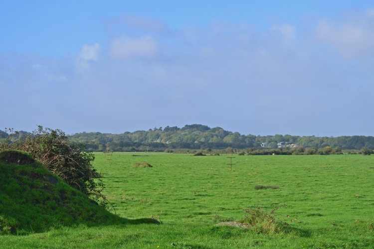 Debden Bay – new pastures